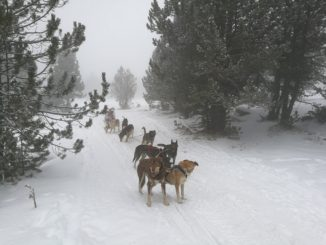 Mushing en Andorra